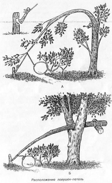 Как ловить гусей в петли